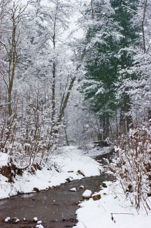 The first snow in the forest. Stock Photo