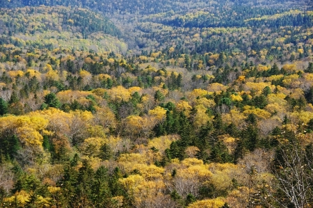 Panorama of bright autumn forest of the passing away.