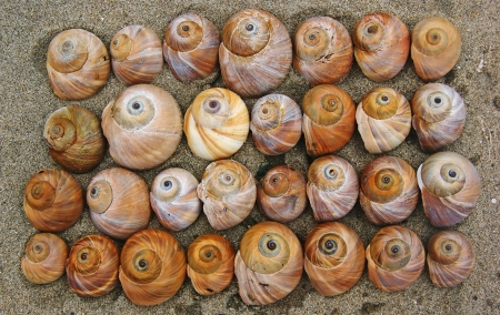 Bright shells of snails are laid on the sand.