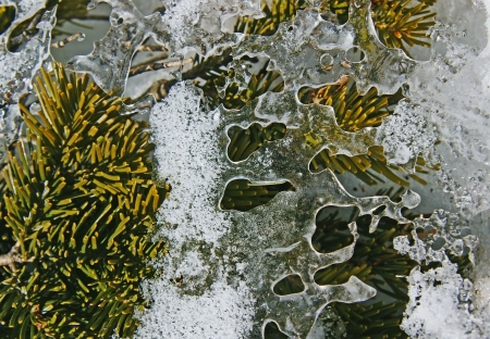 Thin ice pattern on the branches of the fir. Stock Photo