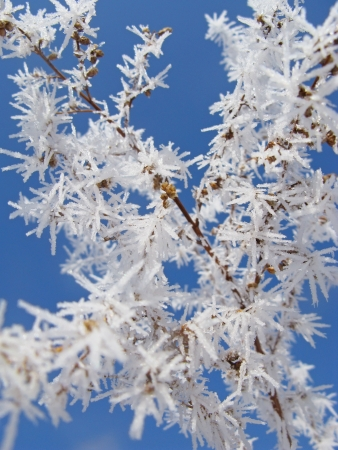 Long crystals of white frost on the dry century grass. Stock Photo