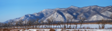 Panorama of snow-capped mountains and unusual curved trees.