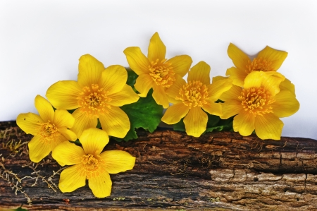 Forest spring flowers on a white background. Stock Photo