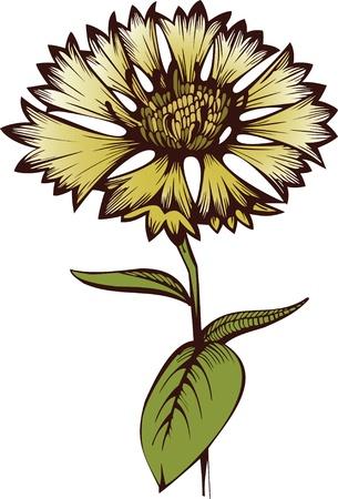 fiordaliso: Flower Fiordaliso Vettoriali