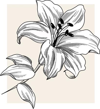 lily leaf: Flower Lily