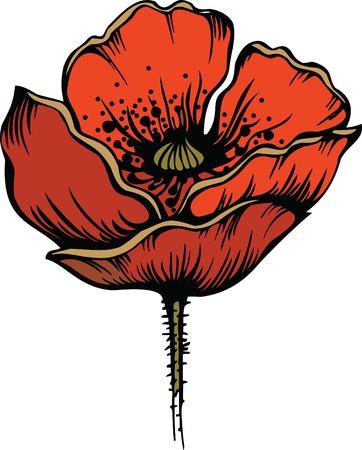 Flower of red poppy Stock Vector - 11651030