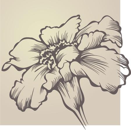 pencil plant: Flower Tagetes patula.