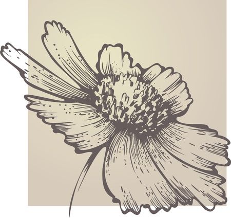 flowering Coreopsis Vector