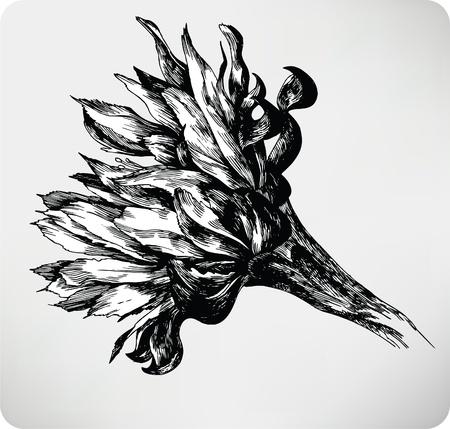 Hand drawn flower cactus Cereus peruvianas f. monstrosus. Çizim