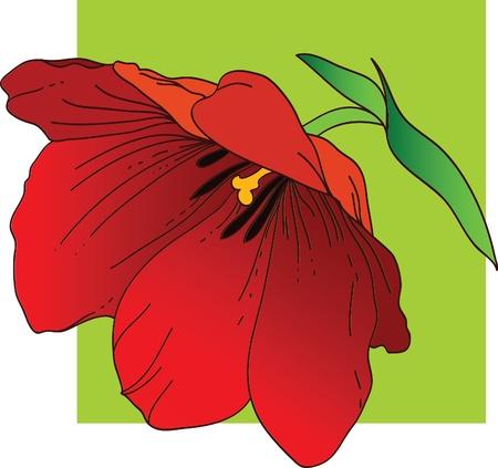 Red tulip Vector