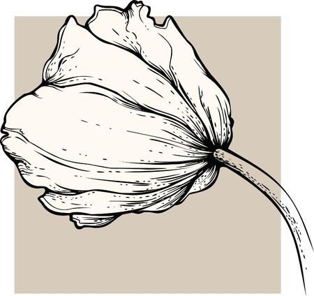 Tulip. Vector