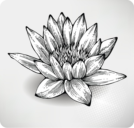 black and white line drawing: White water lily hand drawing.