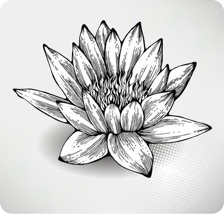 lijntekening: Witte waterlelie de hand tekening. Stock Illustratie