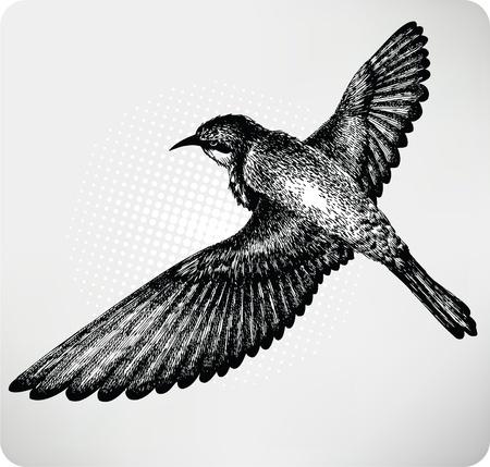 Bird flying hand drawn. Vector.