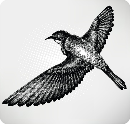 vintage bird: Bird flying hand drawn. Vector.