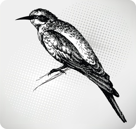 Bird sitting on a branch, Hand drawn. Vector illustration  Vector