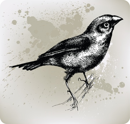Bird sitting on a branch, Hand drawn. Vector illustration. Vector