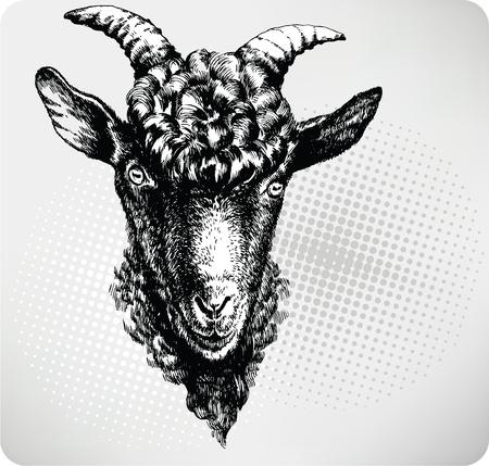 hircus: Black goat hand drawn. Vector illustration.