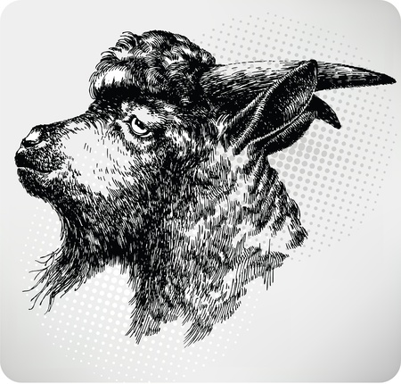 hircus: Black horned goat, hand-drawing. Vector illustration.