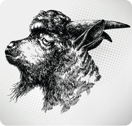 kid goat: Black horned goat, hand-drawing. Vector illustration.