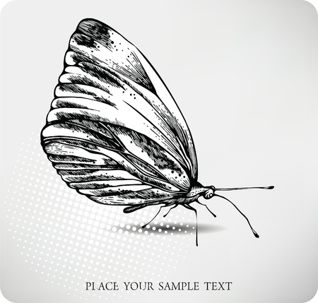 Butterfly hand drawing. vector. Vector