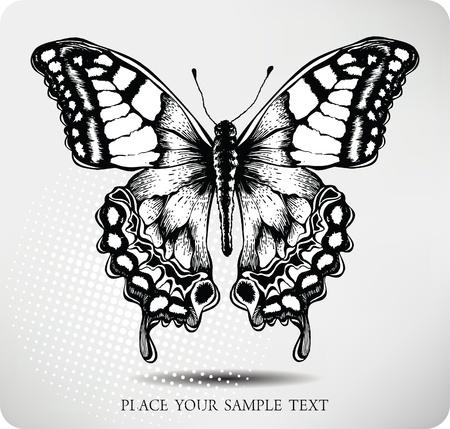 Butterfly de hand tekening. Vector.