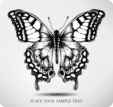 butterfly vector: Butterfly hand drawing. Vector.