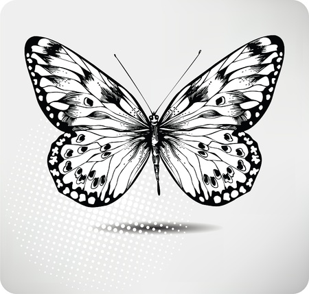tatuaje mariposa: Mariposa drawing.Vector mano. Vectores