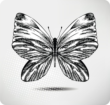 Butterfly hand drawing.Vector. Stock Vector - 11651231