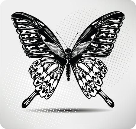 Mariposa drawing.Vector mano. Ilustración de vector