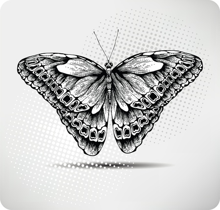 hand drawn wings: Farfalla mano drawing.Vector. Vettoriali