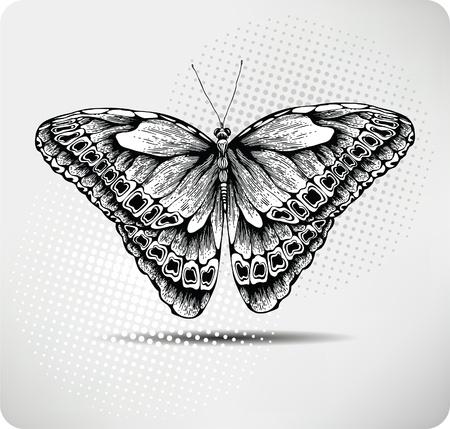 mariposas volando: Mariposa drawing.Vector mano. Vectores