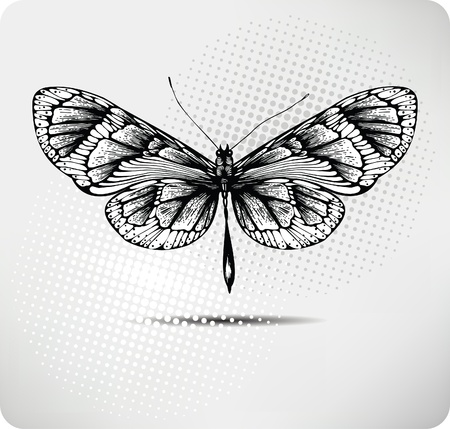 tattoo design: Butterfly hand drawing.Vector. Illustration