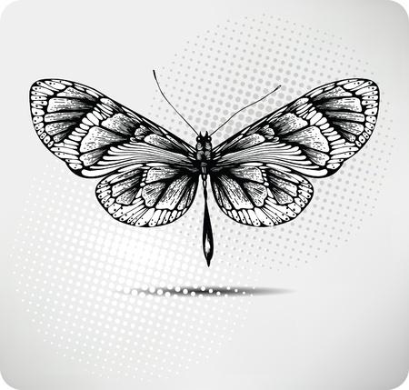 farfalla tatuaggio: Farfalla mano drawing.Vector. Vettoriali