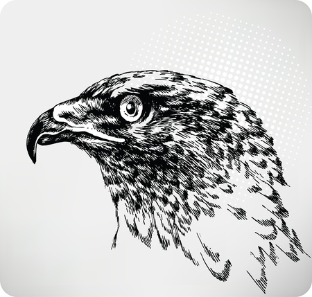 carrion: Buzzard hand drawing.