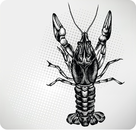 etchings: Crayfish hand drawing. Vector illustration