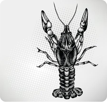 crayfish: Crayfish hand drawing. Vector illustration