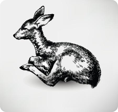 deers: Mano Fawn dibujado de vectores de alta calidad