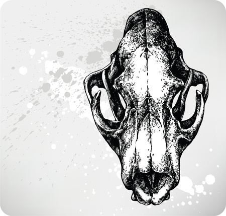 animal blood: Lion Skull, hand drawing. Vector.