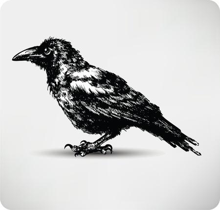 corvo imperiale: Mano Raven disegnato vettoriale di alta qualità.