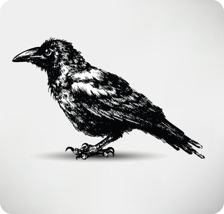 Raven Hand drawn high quality vector.