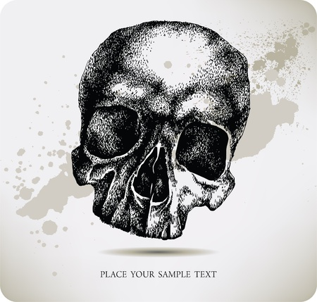 Skull hand drawing. Vector illustration.  Vector