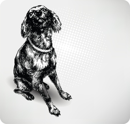 mutt: Sweet dog hand drawing vector.