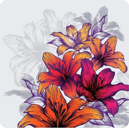 pencil plant: Background with blooming lilies, hand-drawing. Vector illustration.
