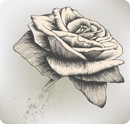 Vintage Rose, hand-drawing. Vector illustration.