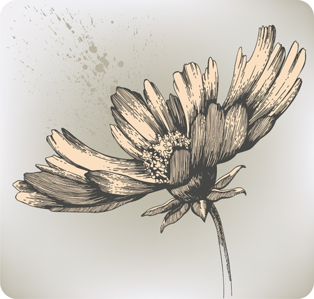Beautiful blooming flowers, hand-drawing. Vector illustration.