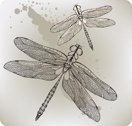 Flying dragonfly, hand-drawing. Vector illustration. Illustration