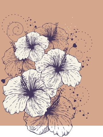 gentle: background with blooming hibiscus.