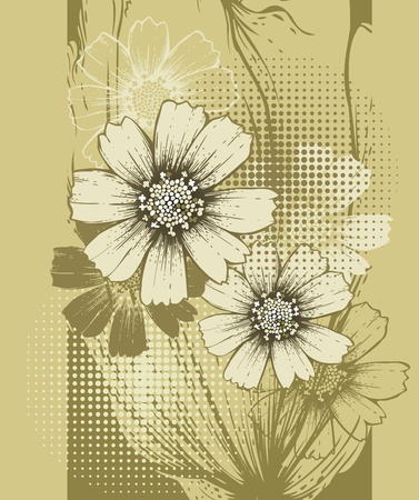 Floral background with blooming cosmos  Illustration