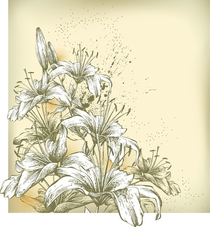 Floral background with blooming lilies, hand drawing  Illustration